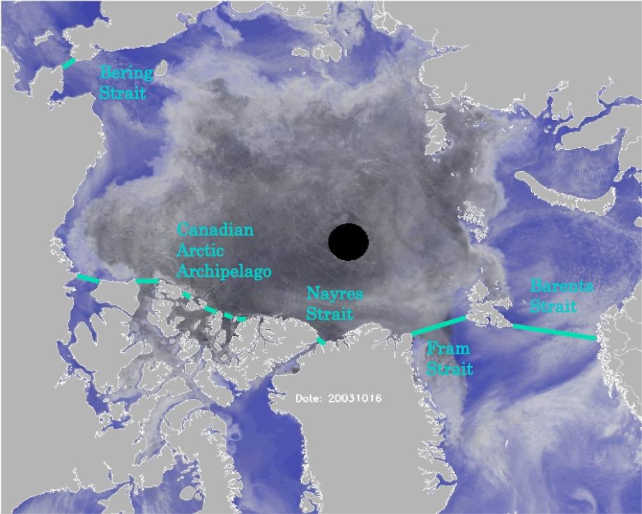 Ice dynamics vs ice thermodynamics